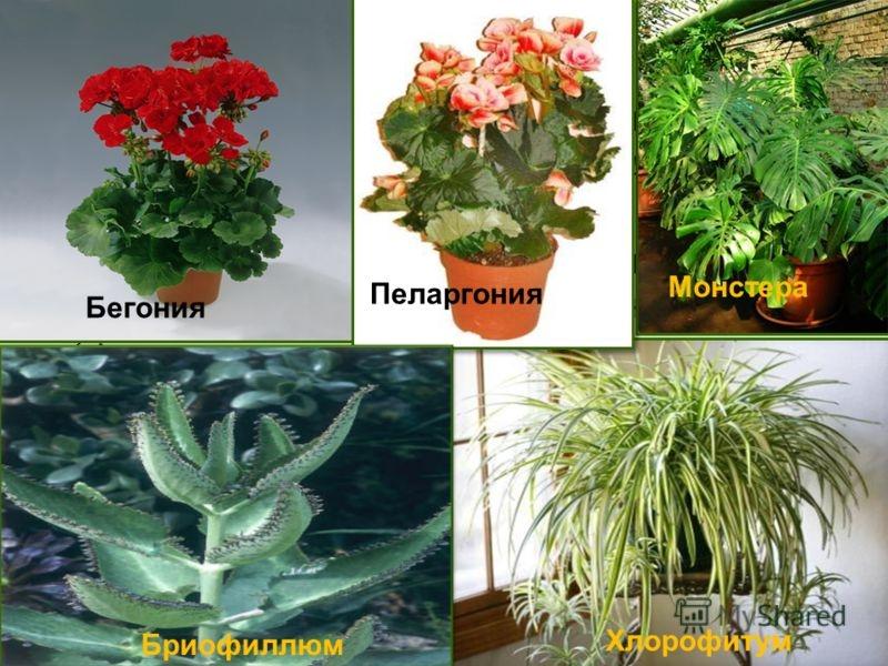 Всех видов комнатных цветов