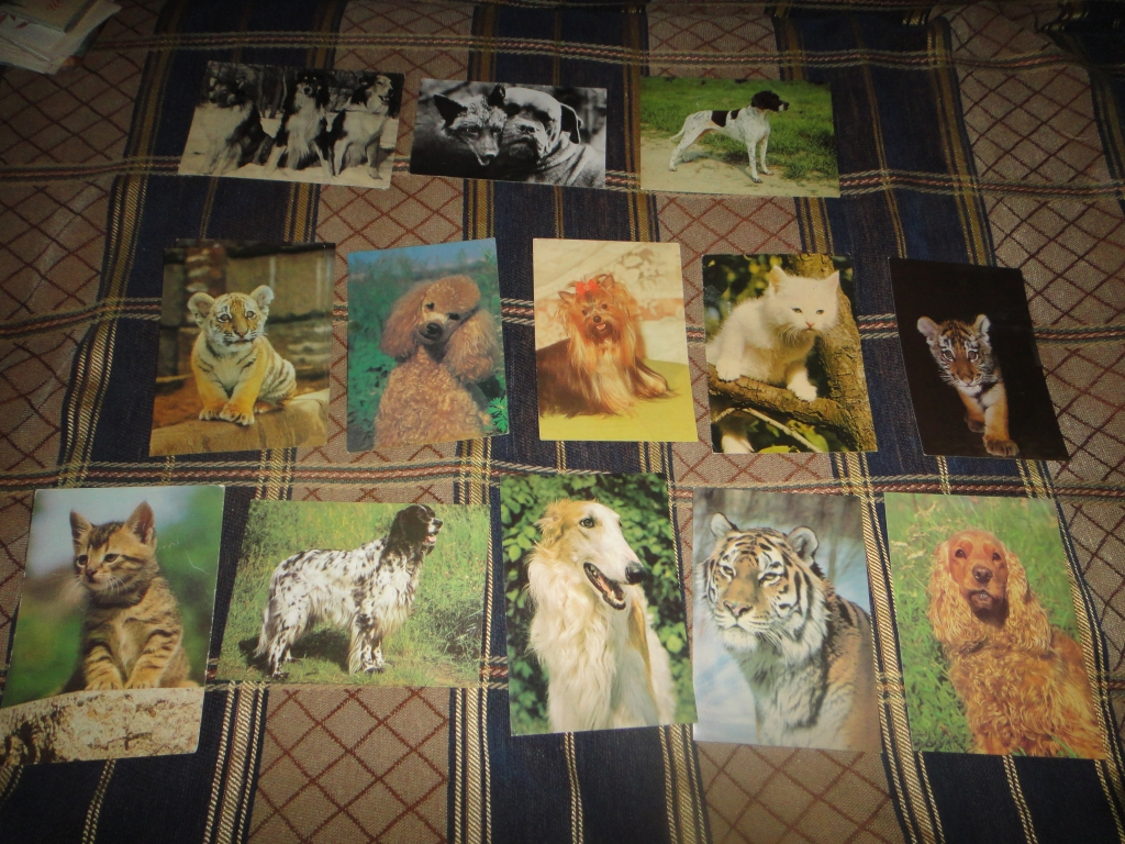 Картинки, где продать календарики и открытки