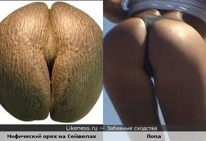 popa-kak-oreh-porno-foto-sayt-gde-mozhno-posmotret-kak-zhenshini-masturbiruyut