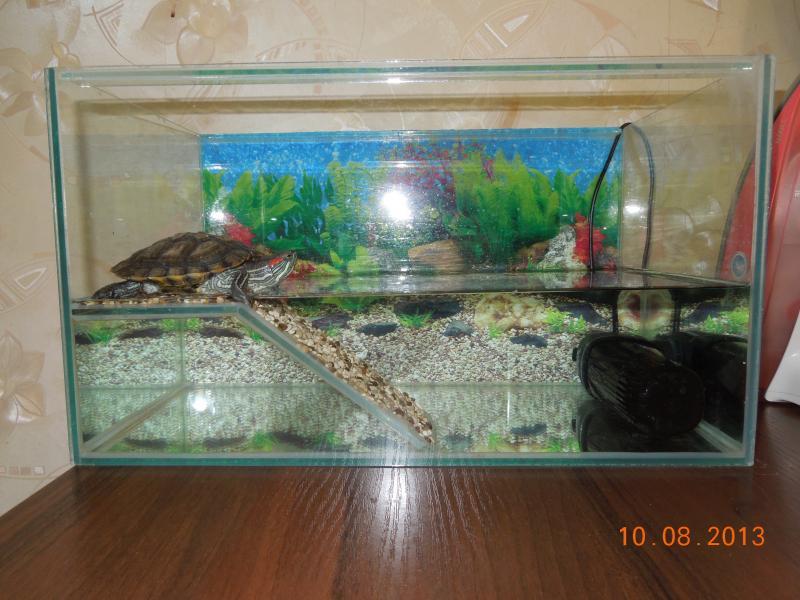 Как сделать аквариум своими руками для красноухой черепахи