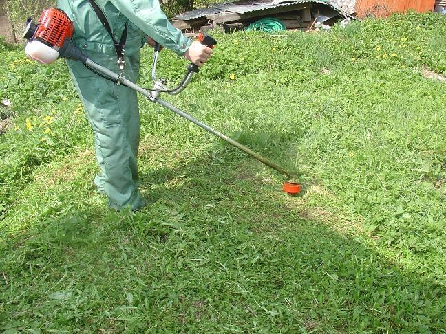 молитвам матушки закон о скашивании травы на участке желанием ворваться