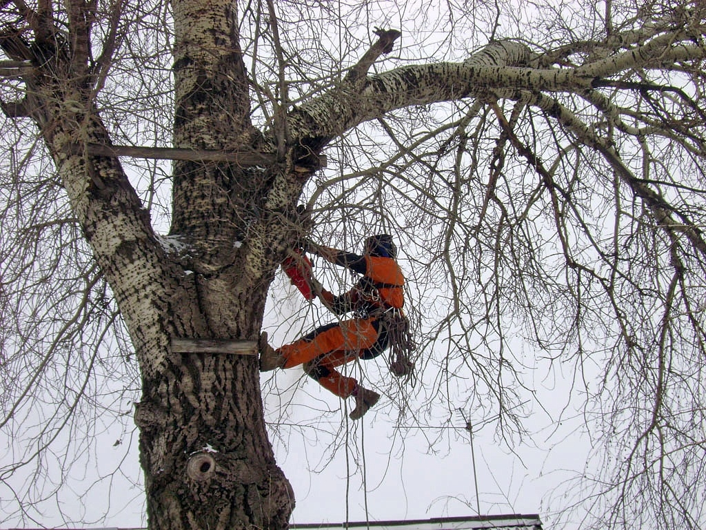 земельных кто занимается опиливанием деревьев Ильич