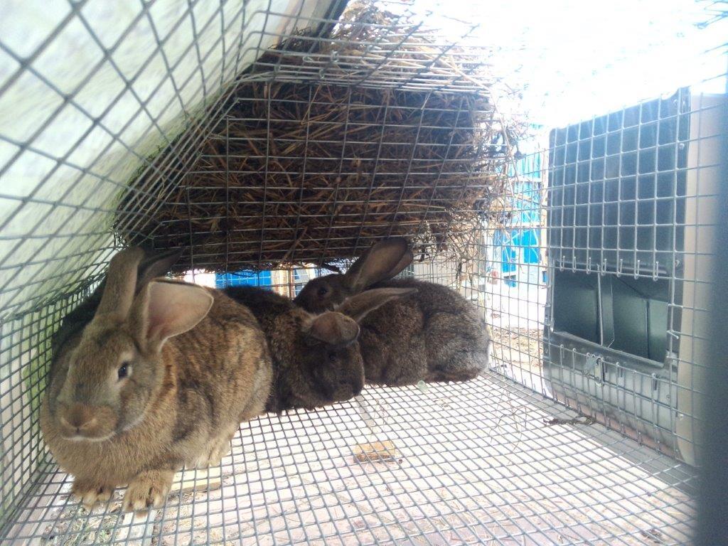 Ивановская барахолка IvBB.RU * клетки, кормушки для кроликов, перепелов, кур и пр.