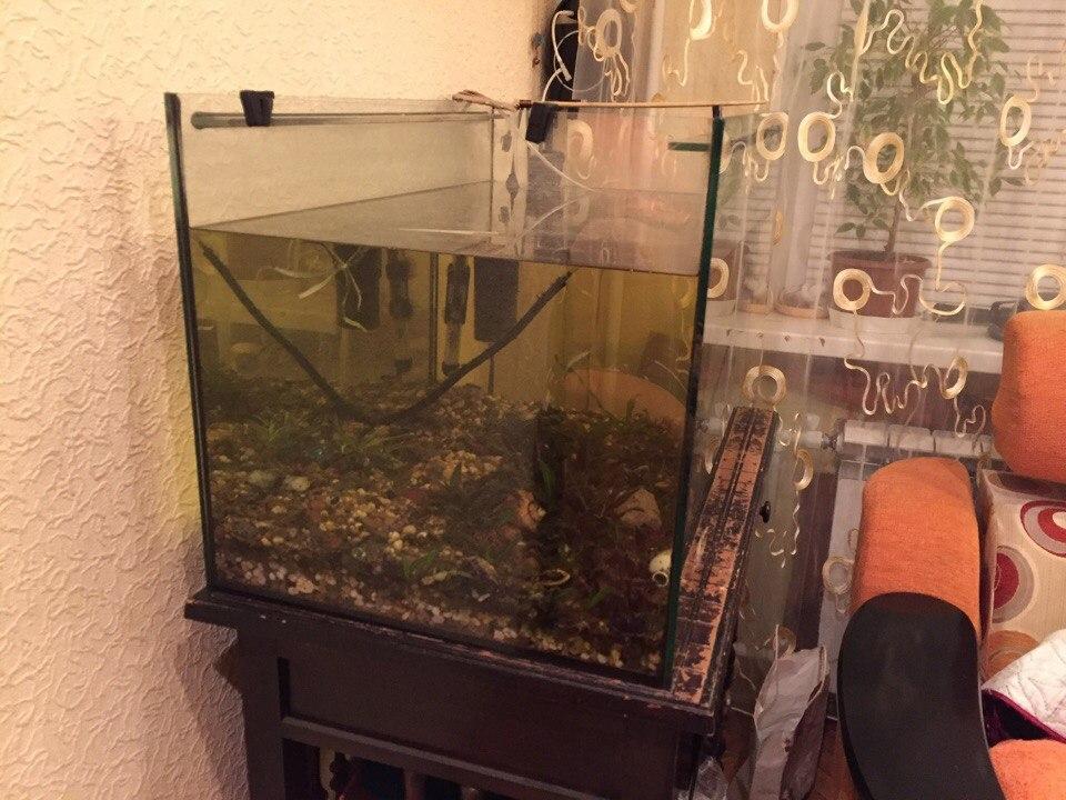 Сделать аквариум на 250 литров своими руками 87