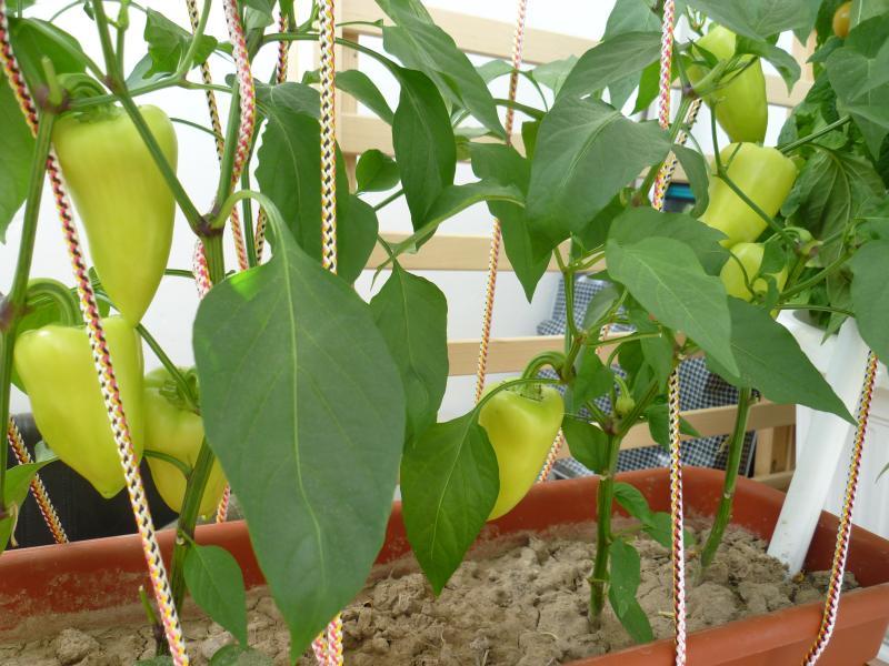 Ивановская барахолка ivbb.ru * что можно выращивать на балко.